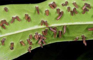 Класифікація паразитів